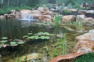 Pond #1