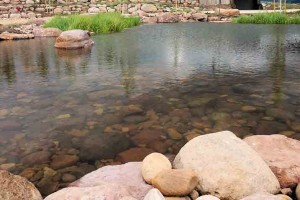 Pond #6