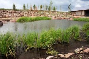 Pond #7