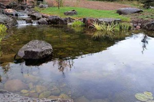 Pond #10