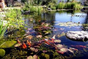 Pond #8
