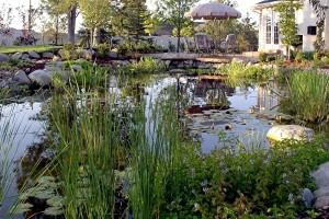 Pond #17
