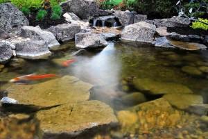 Pond #12