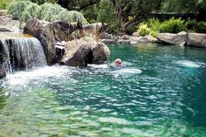 Swim Pond #6